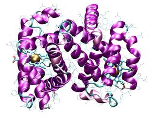 Datei:RTEmagicC protein jpg.jpg